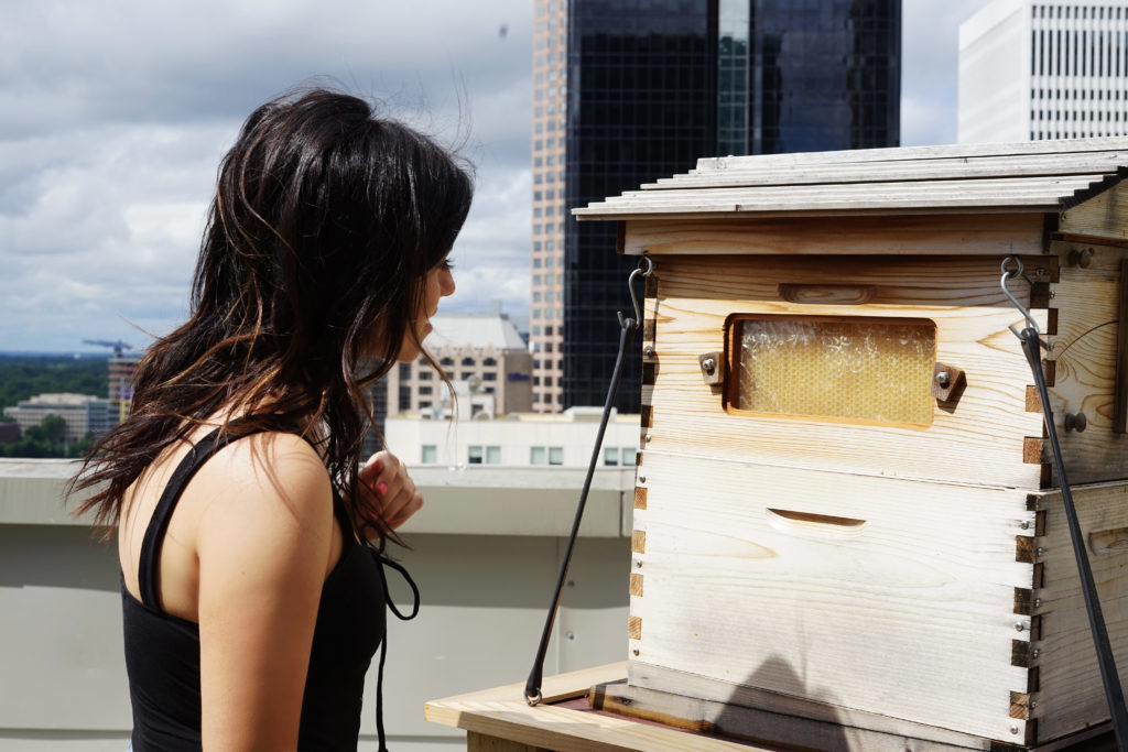 Fresh Honey & Bees on the roof