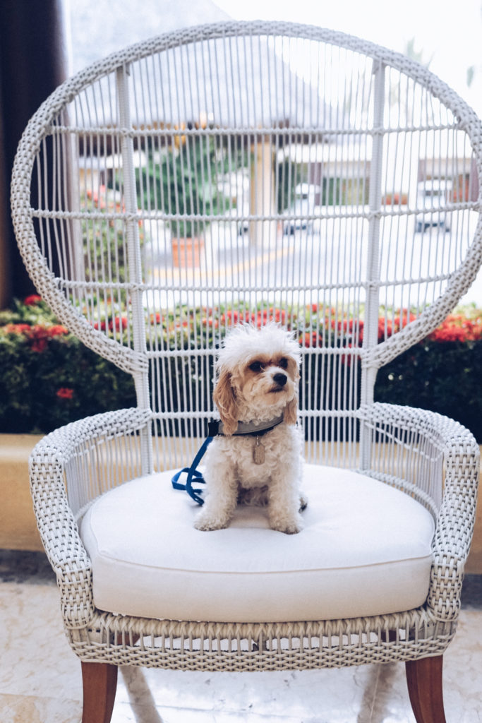 Dog friendly hotel. Dog on cool chair at Four Seasons Punta Mita