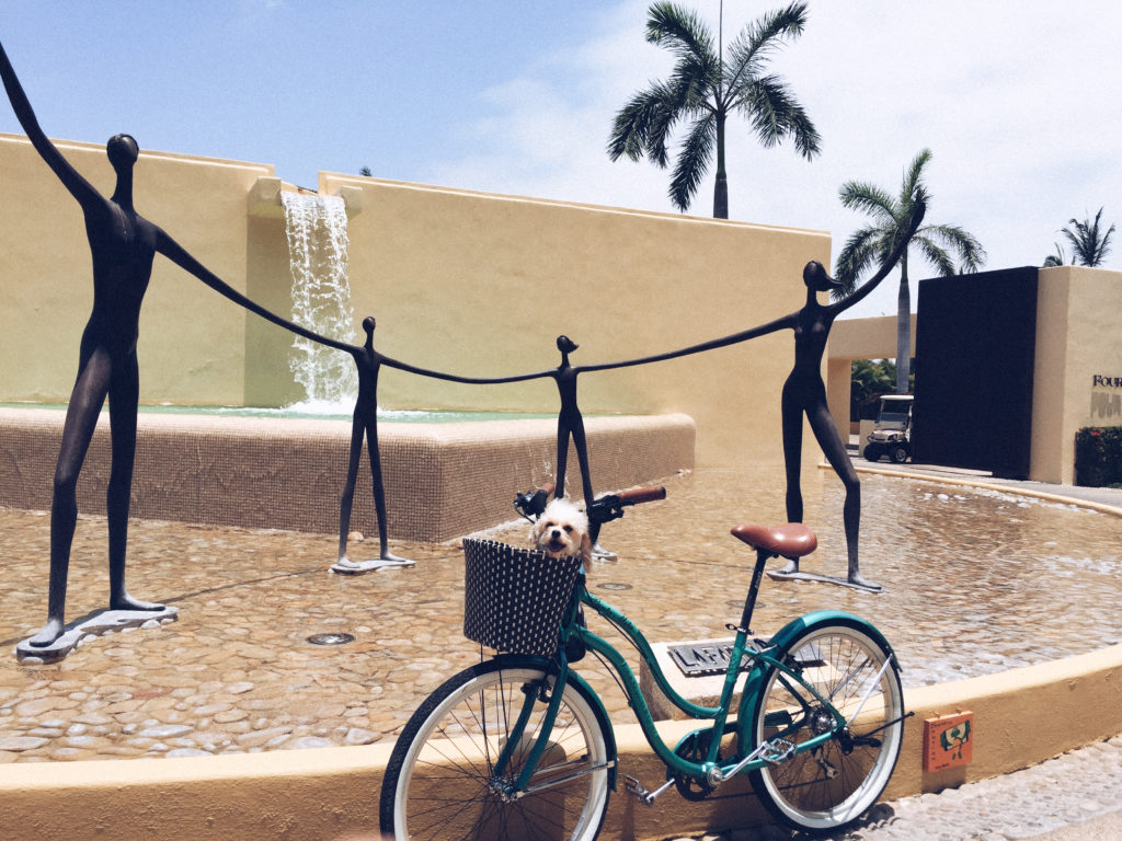 Doug the dog at a dog friendly hotel in Mexico: Four Seasons Punta Mita