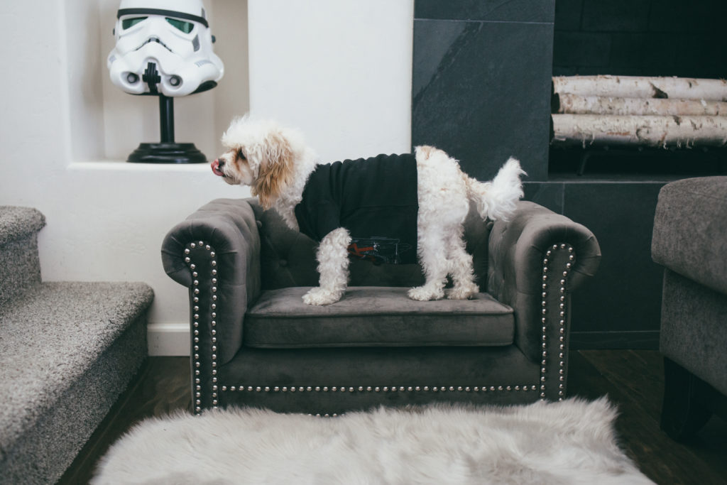 Stylish Velvet Dog Bed - Doug the Dog's Couch