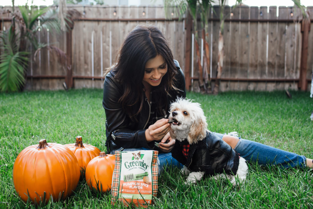 Doug the Dog Fall Photoshoot for Pumpkin Spice Greenies wearing a leather jacket and flannel