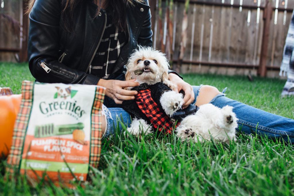 Doug the Dog eating dog treats wearing a dog costume