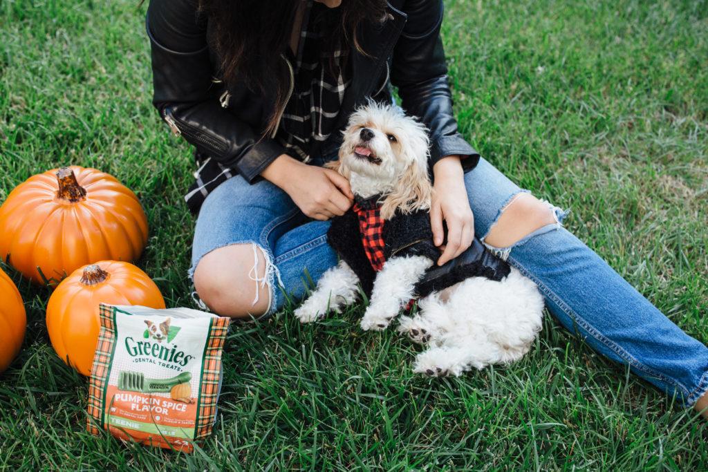 Doug the Dog - dog leather jacket - dog flannel
