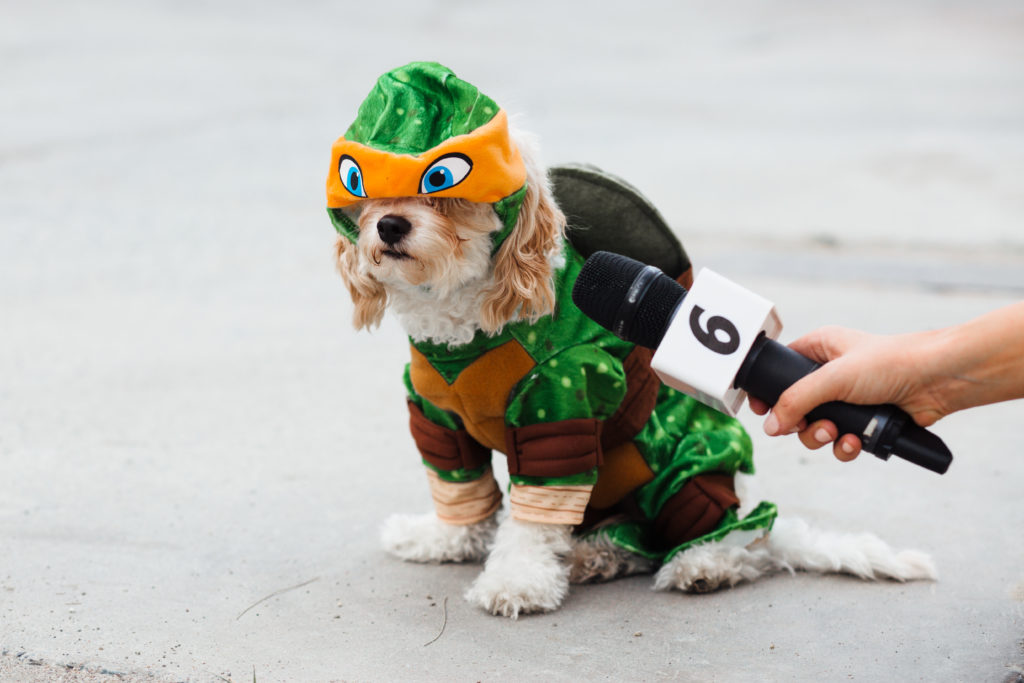 Doug the Dog Cavachon Puppy halloween costume michelangelo teenage mutant ninja turtle