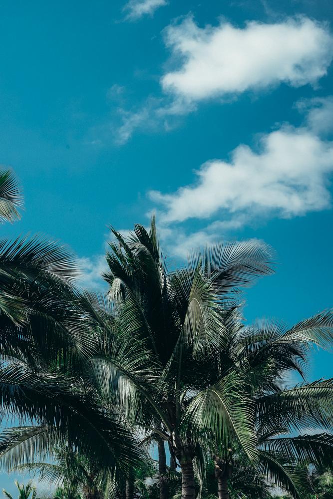 Punta Mita Mexico Travel Blog Palm Trees
