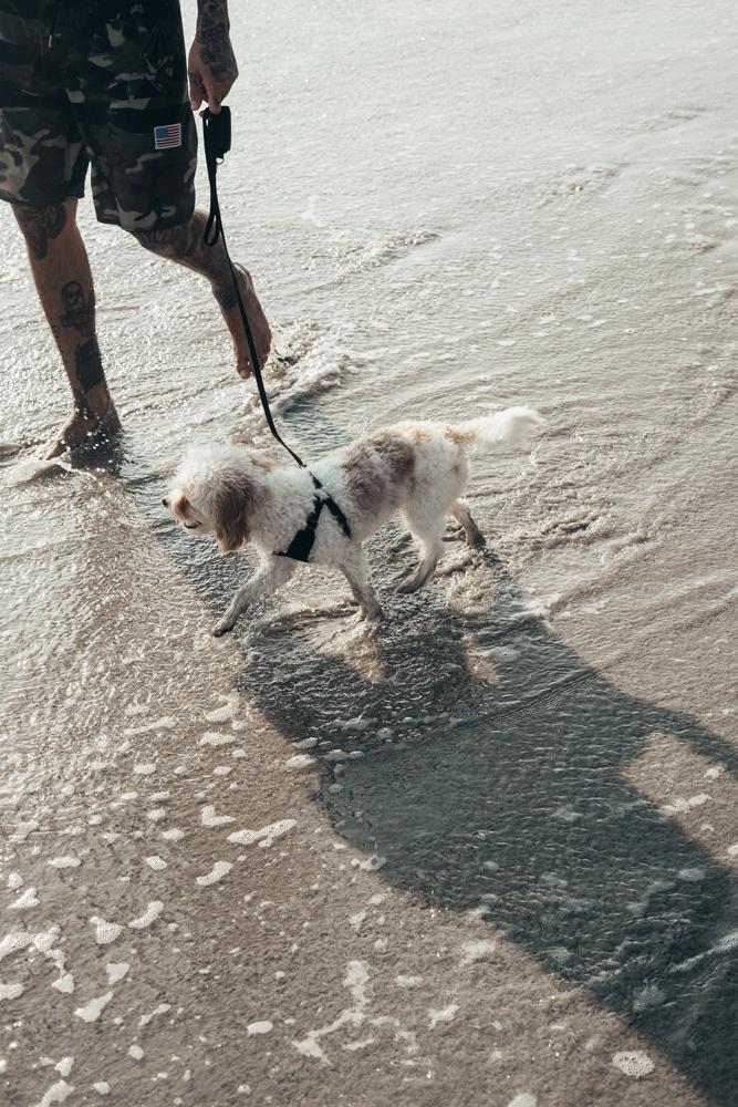 Doug the Dog W Punta Mita Mexico Swimming in Ocean