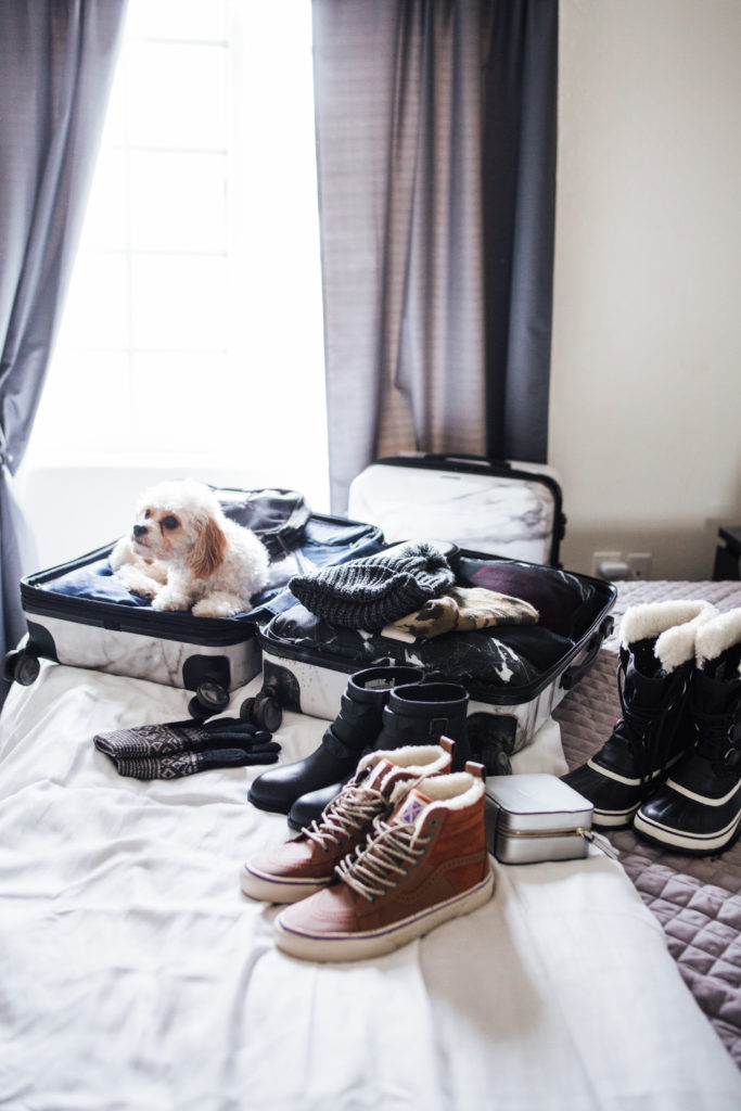 Doug the Dog in suitcase on bed - packing tips