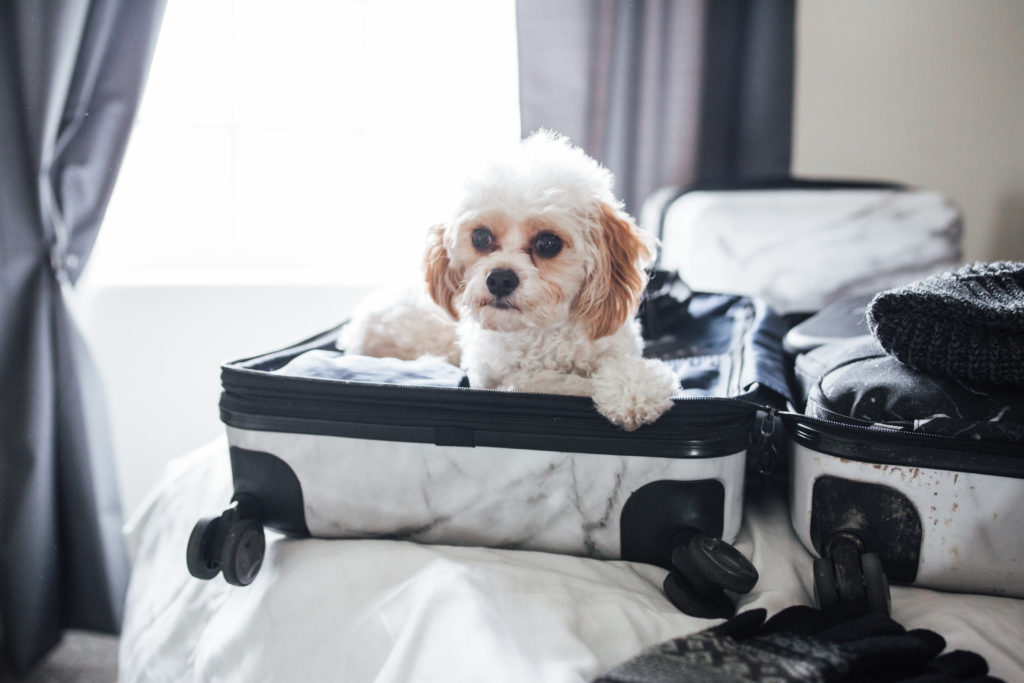 Doug the Dog in a suitcase