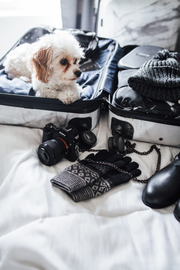 Packing Tips Erin Aschow Travel Blogger Doug the dog in suitcase