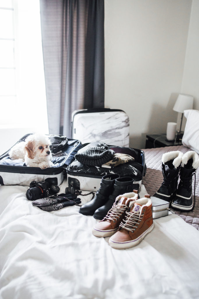 How To Pack Like A Pro Packing Tips Doug the Dog in suitcase